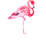 pink flamingo co